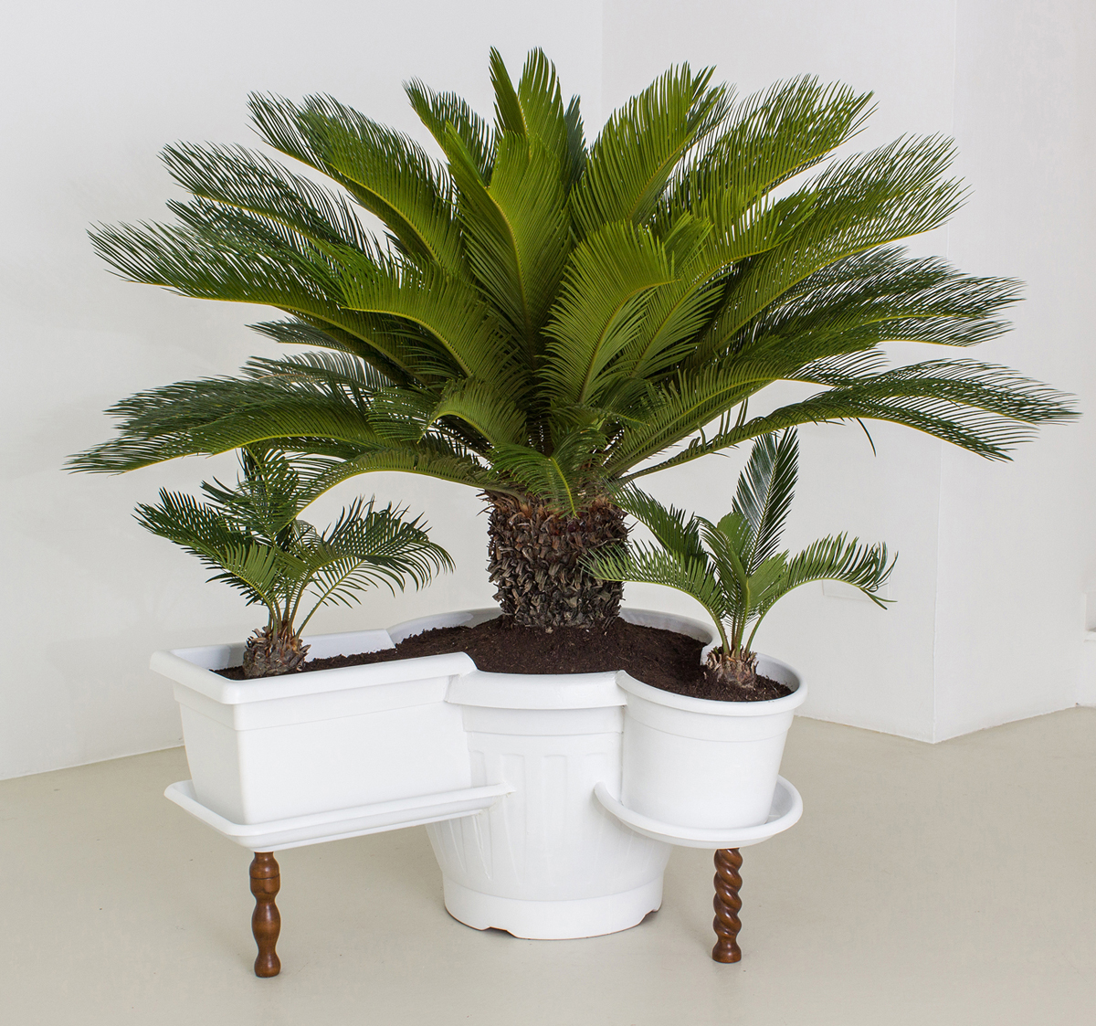 Untitled, 2013, plastic, enamel, ground, wood, Cycas plant , cm 140 x 93 x 76