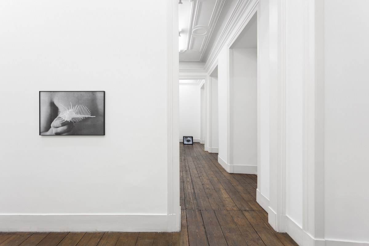 Restless, 2015, exhibition view at Vera Cortês Gallery, Lisbon, P