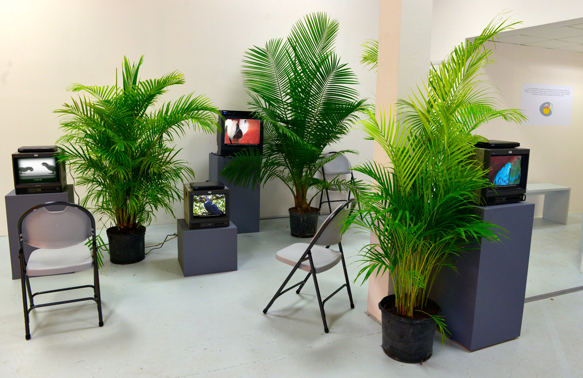 Latin American Art Museum, Department of Parrots, 2015, exhibition view at Jenielift, Miami