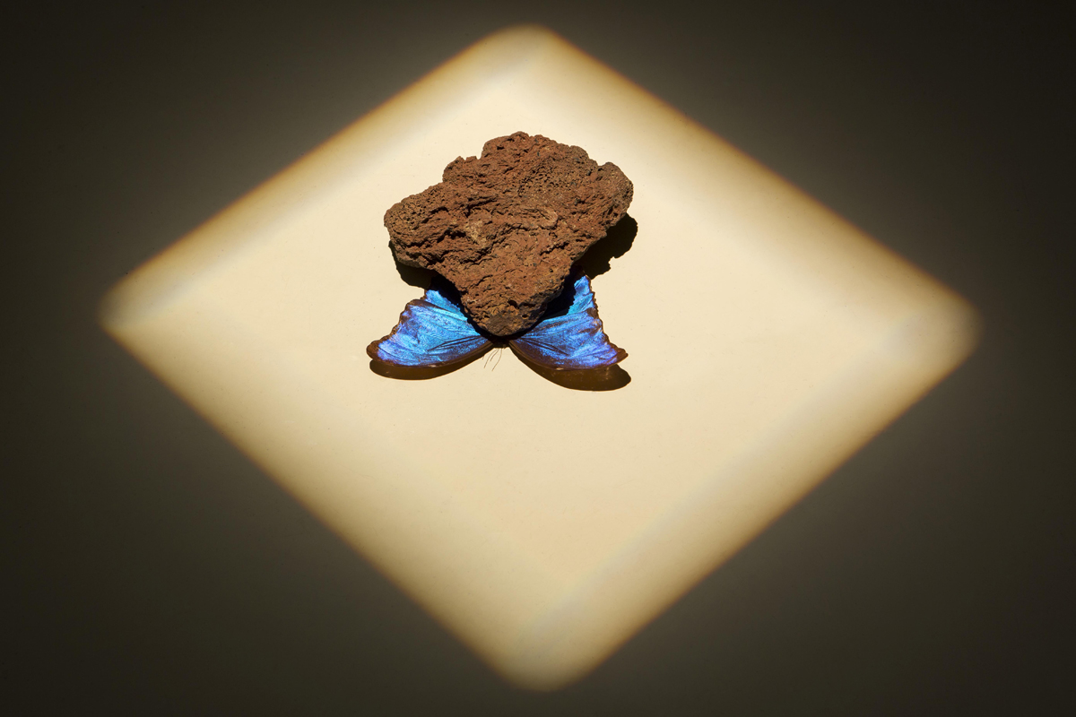 mediterranean autumn, 2013, butterfly, stone - photo Renato Ghiazza