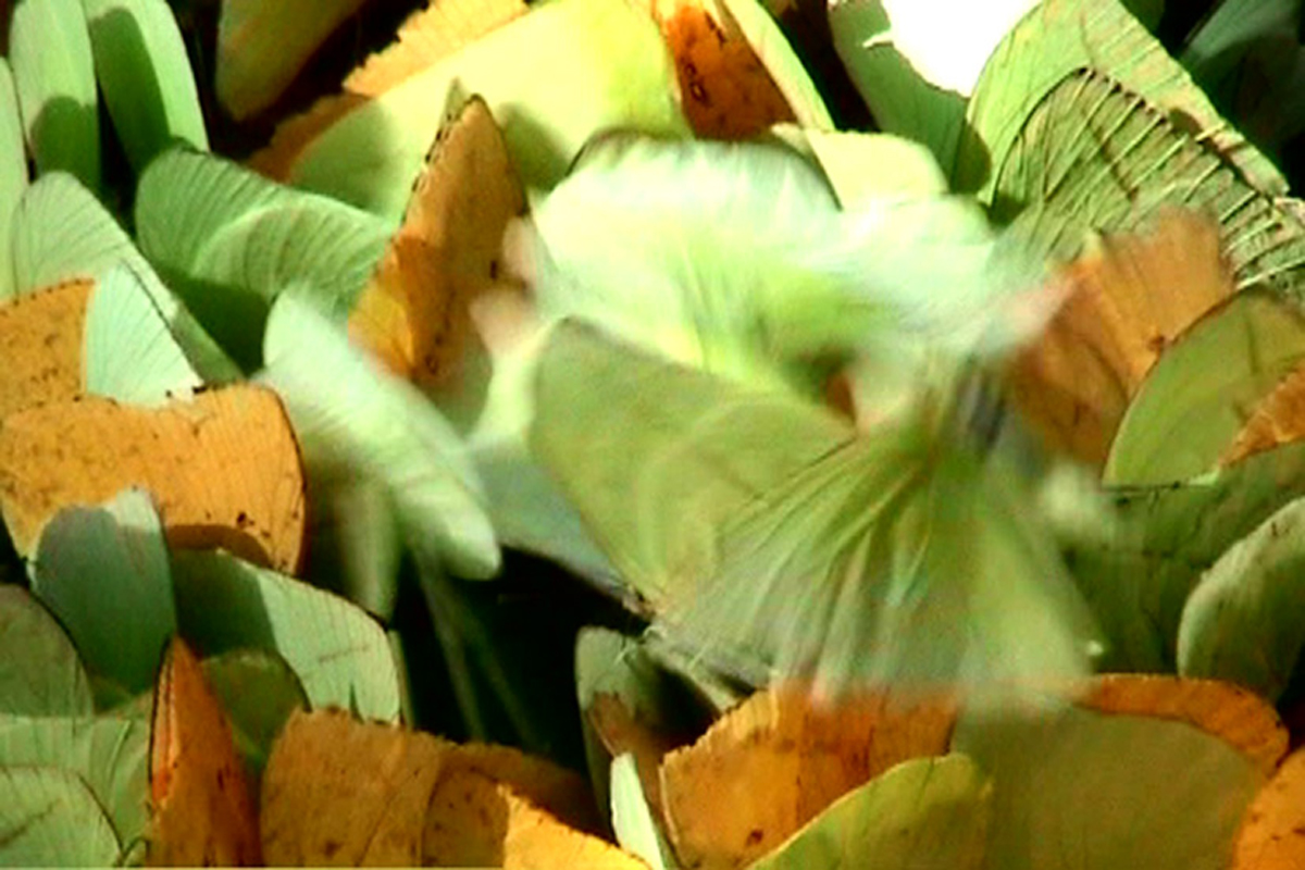Modernist Butterflies, 2006, video still, 7' 23'', detail of Building as Rodin's Balzac