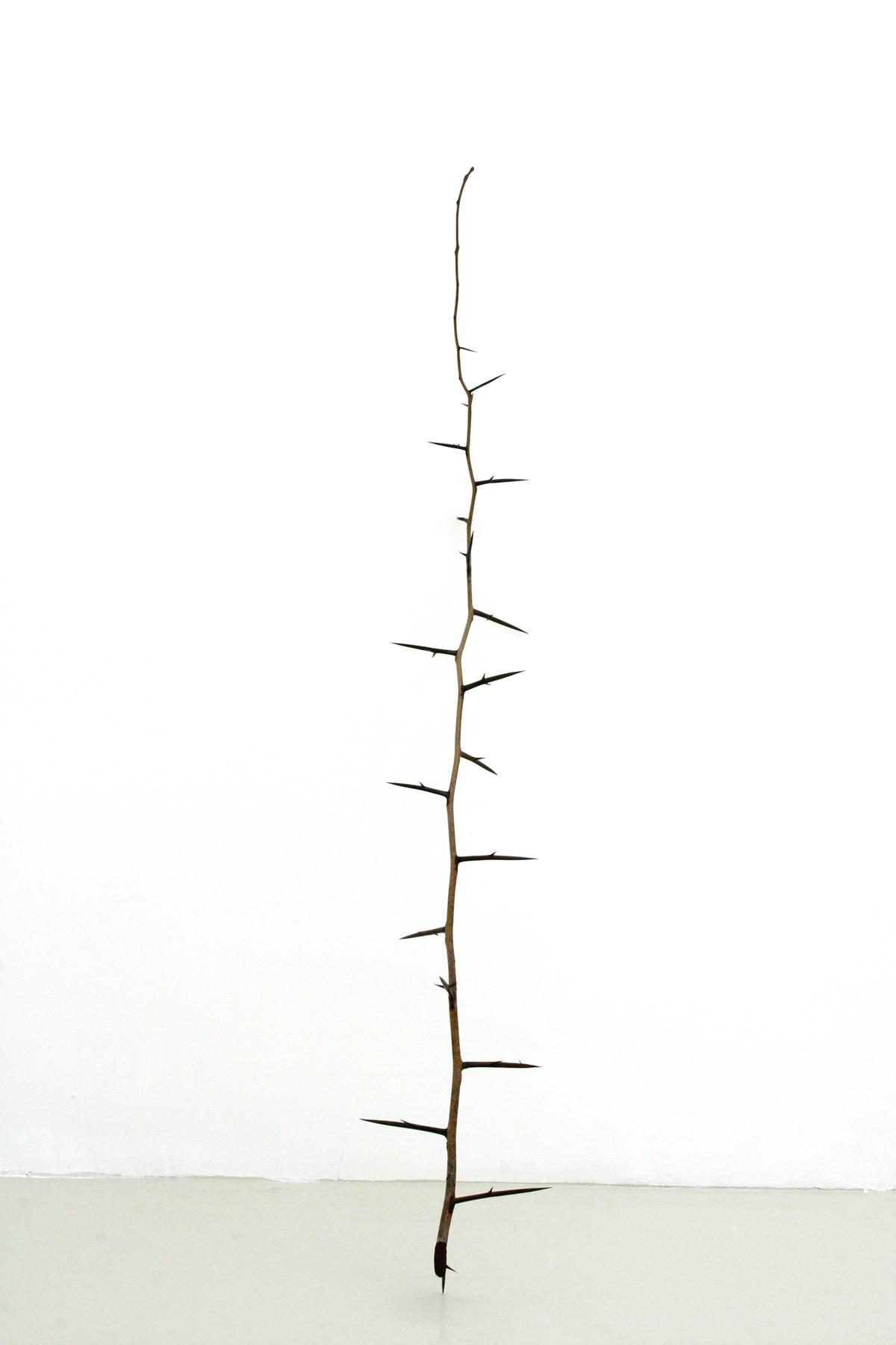 Untitled, 2006, carrob branch, cm 123 x 5