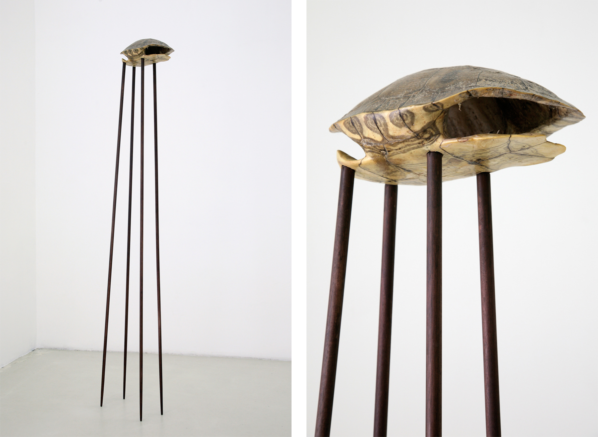 tana di rospo, 2009, wood, turtle shell, cm 178 x 28 x 24