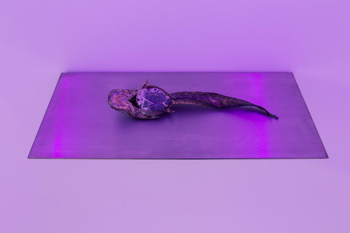 La fine dei fiumi, 2014, silurus glanis, stainless steel, cm 25x50