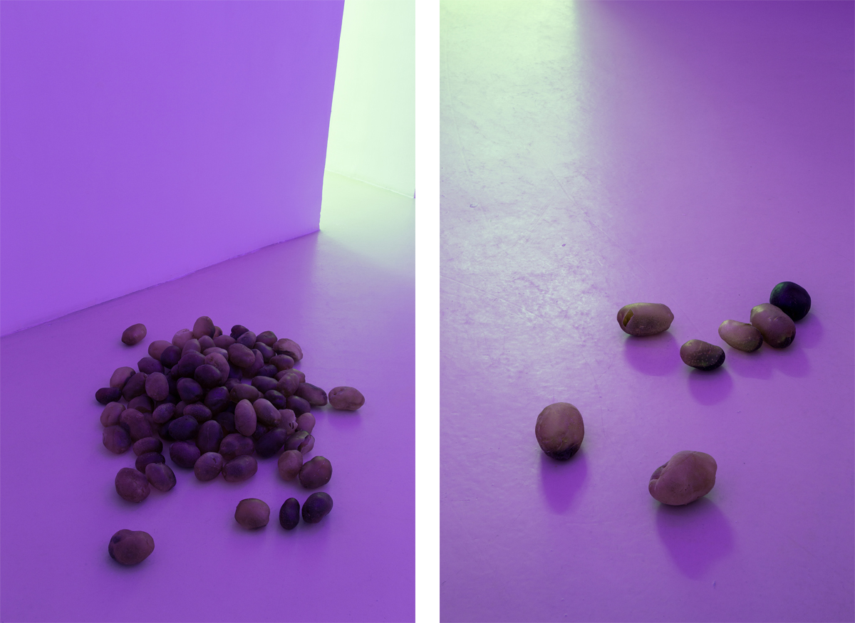Campo di patate, 2014, 100 potatoes of resin, pigment, variable dimensions