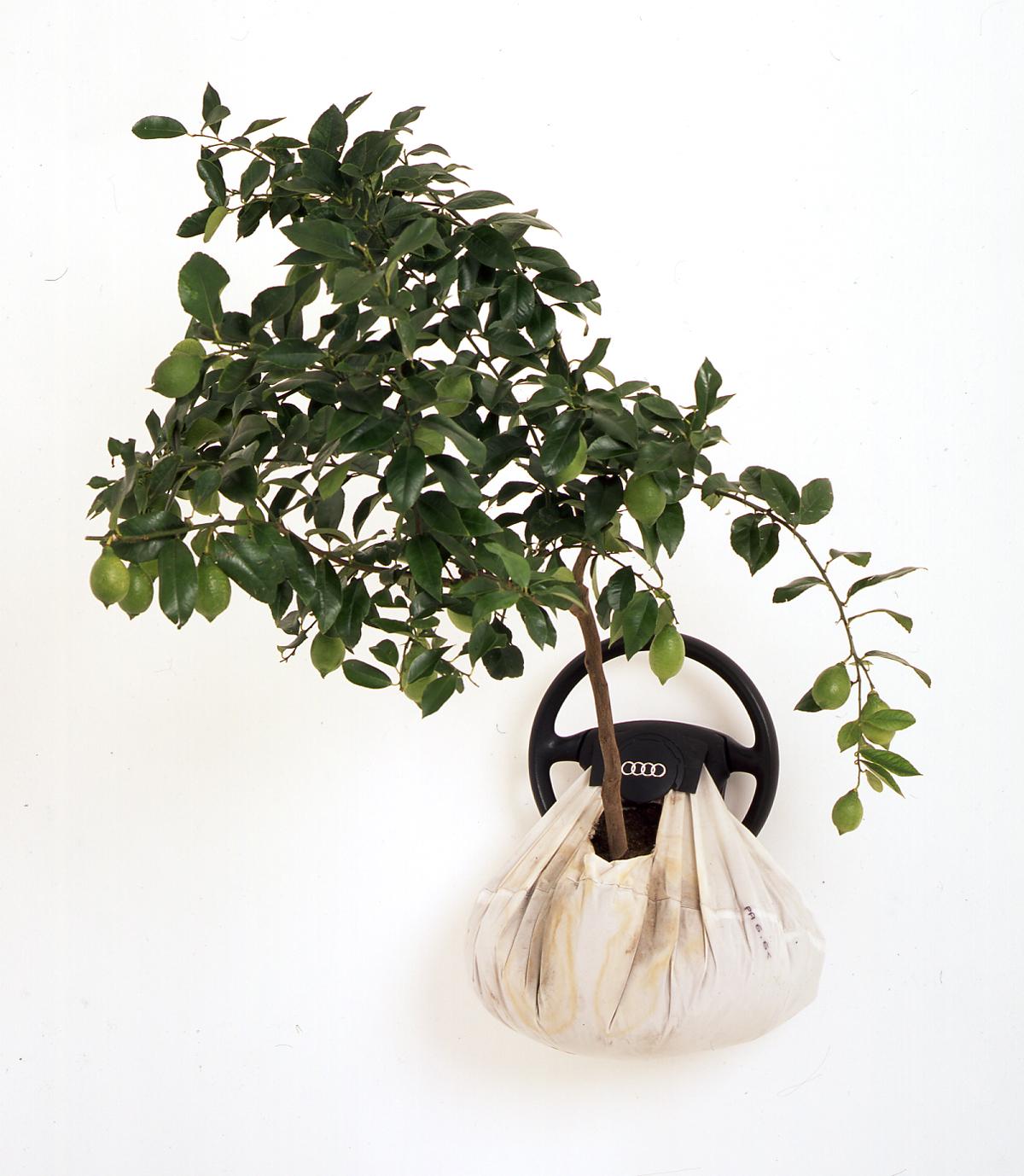 Airbag-Growbag, 2005, airbag, lemon tree