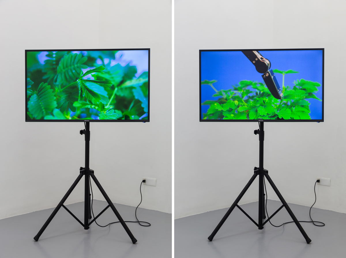 """The Pudic Relation Between Machine and Plant, 2016, video, color, sound, 2'30"""""""
