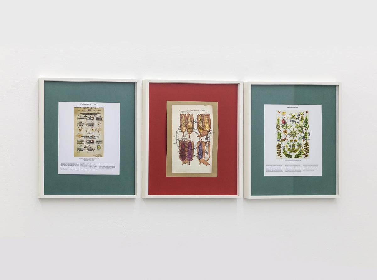 The gene series, 2017, soy based ink print, cm 46x38 each